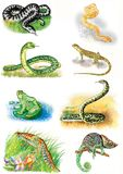 Illustraties van dieren Adder, boa, slang, hagedis, kikker, anaconda, newt, kameleon stock illustratie
