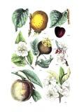 Illustraties van installatie stock afbeeldingen