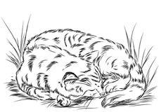 Illustration à l'utilisation des produits pour des chats et des animaux différents L'IL Photo libre de droits