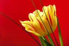 """Illustration †""""Nahaufnahmezusammensetzung der blühenden botanischen Tulpe Stockbild"""