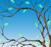 Illustration with Abstract background image with the branches and leaves of the tree on a blue sky background. Abstract background image with the branches and royalty free illustration