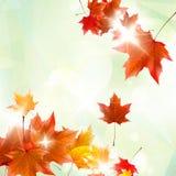Illustration abstraite d'automne avec des feuilles d'érable Photos stock