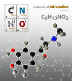 Illustration of Adrenaline Molecule isolated grey background Stock Images