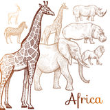 Illustration of African animals. Poster African animals. Vector illustration for book covers, brochures. Drawing on white background Royalty Free Stock Images