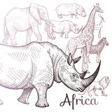 Illustration of African animals. Poster African animals. Vector illustration for book covers, brochures. Hand drawing on white background Royalty Free Stock Images
