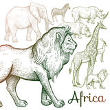 Illustration of African animals. Poster African animals. Vector illustration for book covers, brochures. Hand drawing on white background Stock Image
