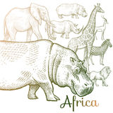 Illustration of African animals. Poster African animals. Vector illustration for book covers, brochures. Hand Drawing on white background Royalty Free Stock Image