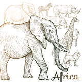 Illustration of African animals. Poster African animals. Vector illustration for book covers, brochures, text Royalty Free Stock Images