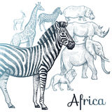 Illustration of African animals. Poster African animals. Vector illustration for book covers. Hand Drawing on white background Stock Photos