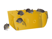 Mouses Royalty Free Stock Photography