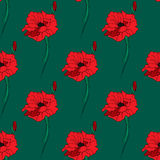 Illustration of alone red poppy. Seamless pattern. Stock Photos