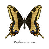 Illustration of American Bahamas Swallowtail Butterfly - Papilio Stock Photos