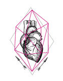 Illustration anatomical heart Royalty Free Stock Photo