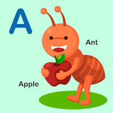 Illustration  Animal Alphabet Letter A-Ant,Apple. Vector Stock Image