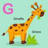 Illustration  Animal Alphabet Letter G-Grass,Giraffe Stock Photography