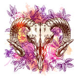 Illustration  animal skull Royalty Free Stock Images
