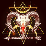 Illustration animal skull Royalty Free Stock Image