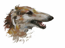 Illustration animale d'aquarelle de chien de lévrier Images libres de droits