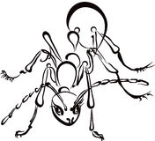 Illustration of an ANT Royalty Free Stock Photos
