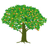 Illustration of apple tree Stock Image