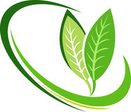 Leaf logo. Illustration art of a leaf logo with isolated background