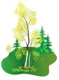 Illustration with autumn birch - vector. Vector illustration with autumn birch Royalty Free Stock Image