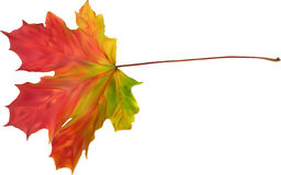Illustration with autumn bright maple leaf Stock Photos