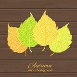Illustration of autumn leaves Stock Photos