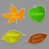 Autumn leaves set, isolated on grey background. stock illustration