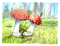 Illustration of autumn mushrooms Stock Images