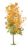 illustration of autumn tree Stock Photos