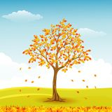 Autumn tree with falling leaves Stock Images