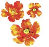 Illustration av blomman Arkivfoton