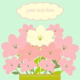 Buketten av rosa färg blommar kortet Vektor Illustrationer