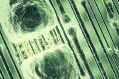 Illustration av en aktiv receptor på vit bakgrund framförande 3d royaltyfri illustrationer