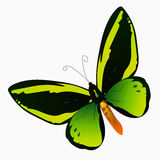 Illustration av en färgrik fjäril Arkivfoto