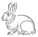 Illustration av en kanin Fotografering för Bildbyråer