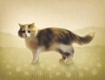 Illustration av en katt Royaltyfria Foton