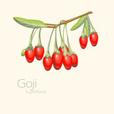 Illustration av gojibär Ny frukt Royaltyfri Bild