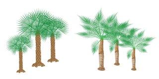 Illustration av isometriska palmträd på vitbakgrund Arkivfoto