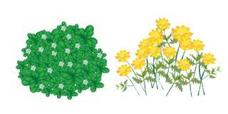 Illustration av jasminväxter och kosmosblommor Arkivfoton