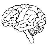 Illustration av människan Brain Anatomy som färgar sidan royaltyfri bild