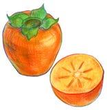 Illustration av mogen persimonfrukt Royaltyfri Fotografi