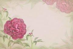 Illustration av pionblomman. Perfekt Royaltyfri Fotografi