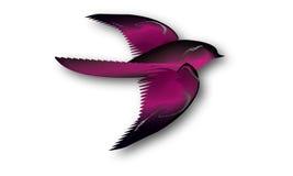 Illustration av rosa färg- och svartfågeln Royaltyfri Bild