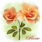 Illustration av rosor på en kulör bakgrund vektor illustrationer