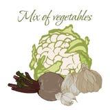Illustration av smakliga Veggies royaltyfri fotografi