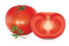 Illustration av tomaten Arkivbild