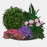 Illustration av trädgårds- rabatt Stock Illustrationer