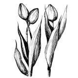 Illustration av tre tulpandiagram Royaltyfri Illustrationer